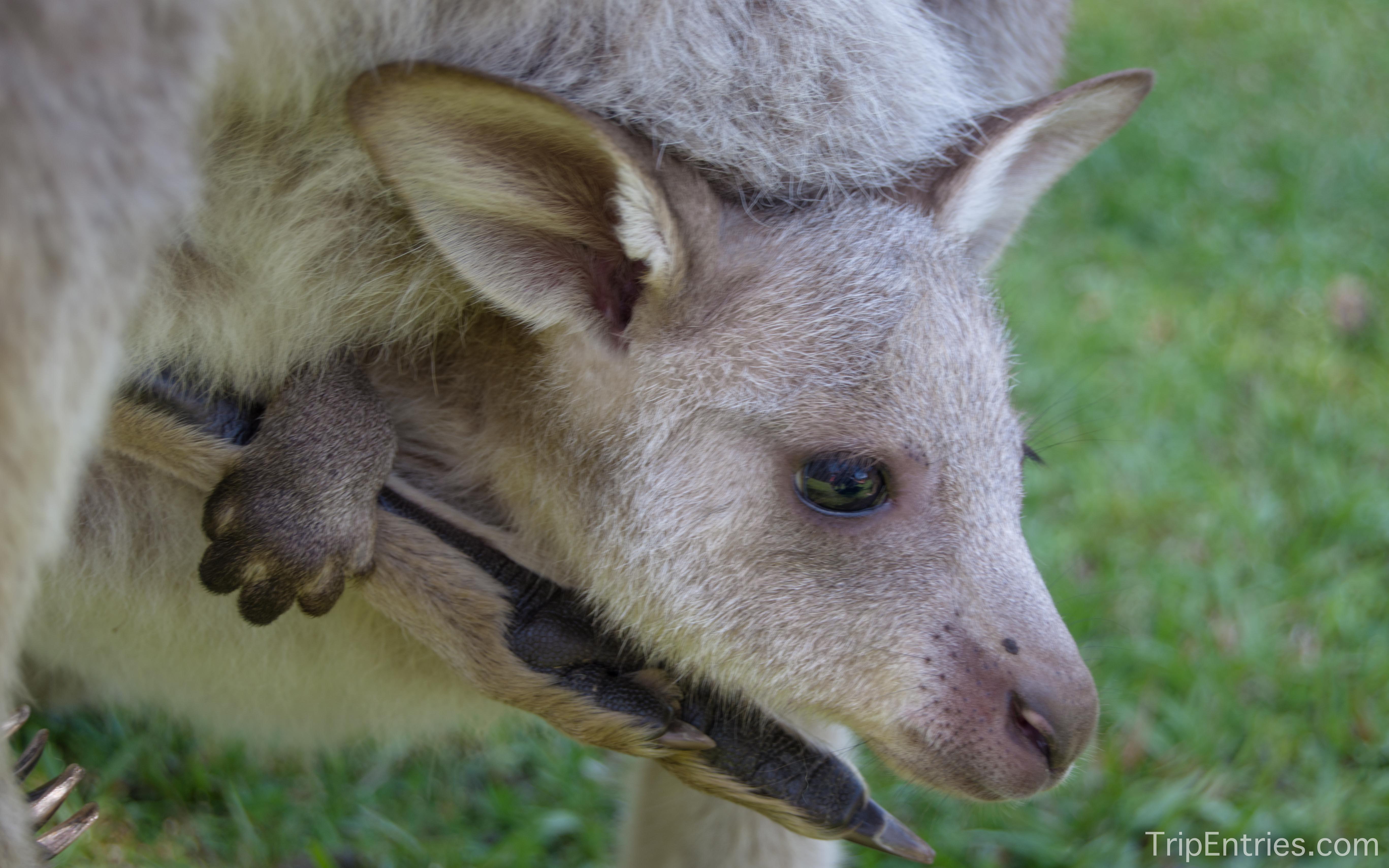 Долгожданная встреча с кенгуру!