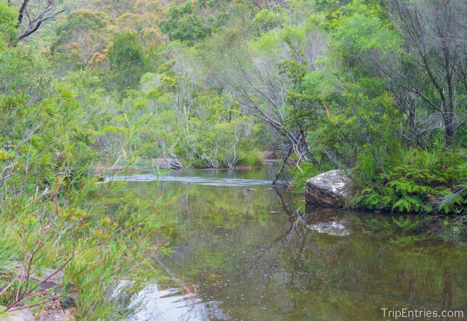 Royal National Park: чудесный пеший трек по Национальному парку