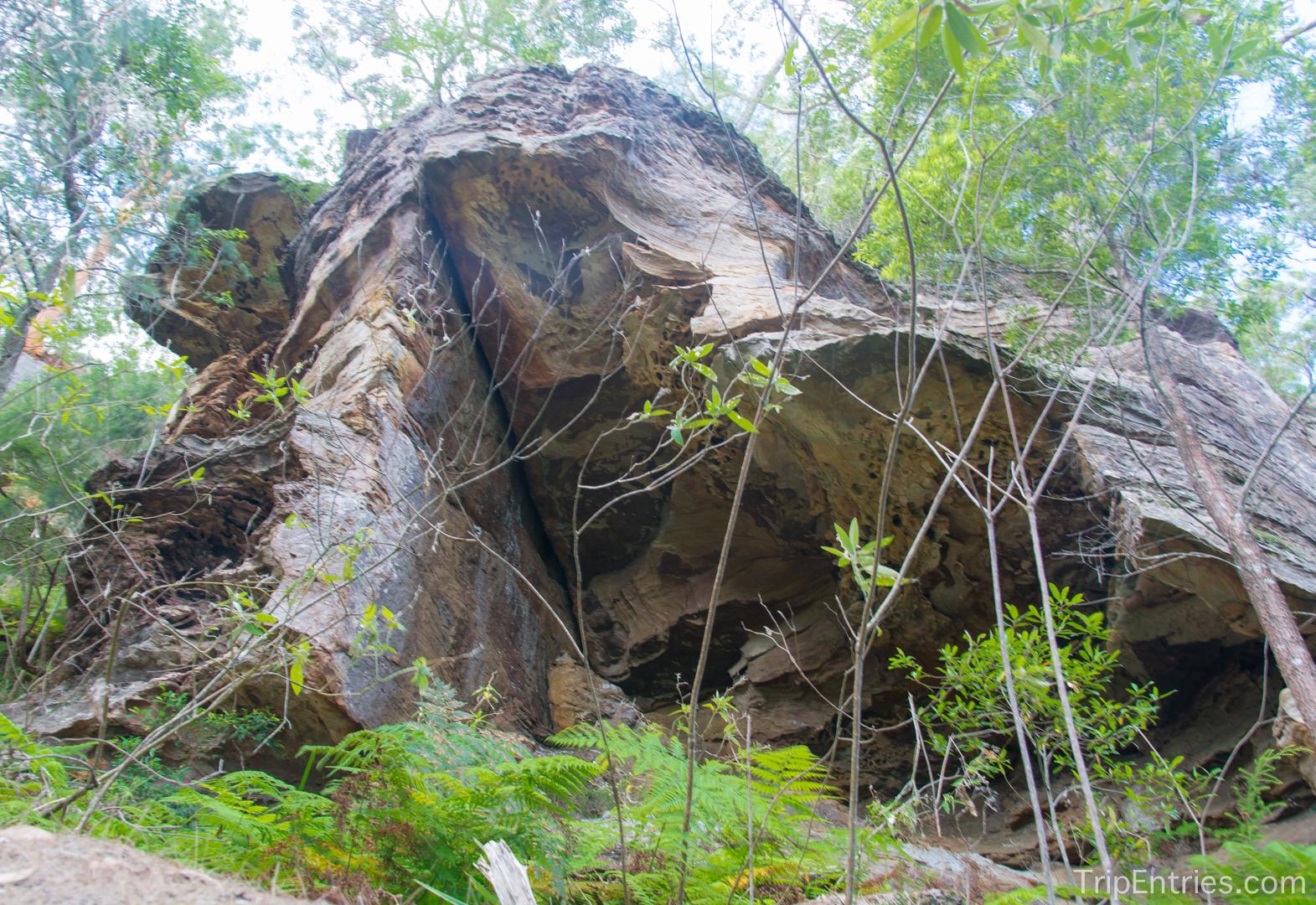 Ku-Ring-Gai Chase National Park: прогулка вдоль реки и встреча с вараном