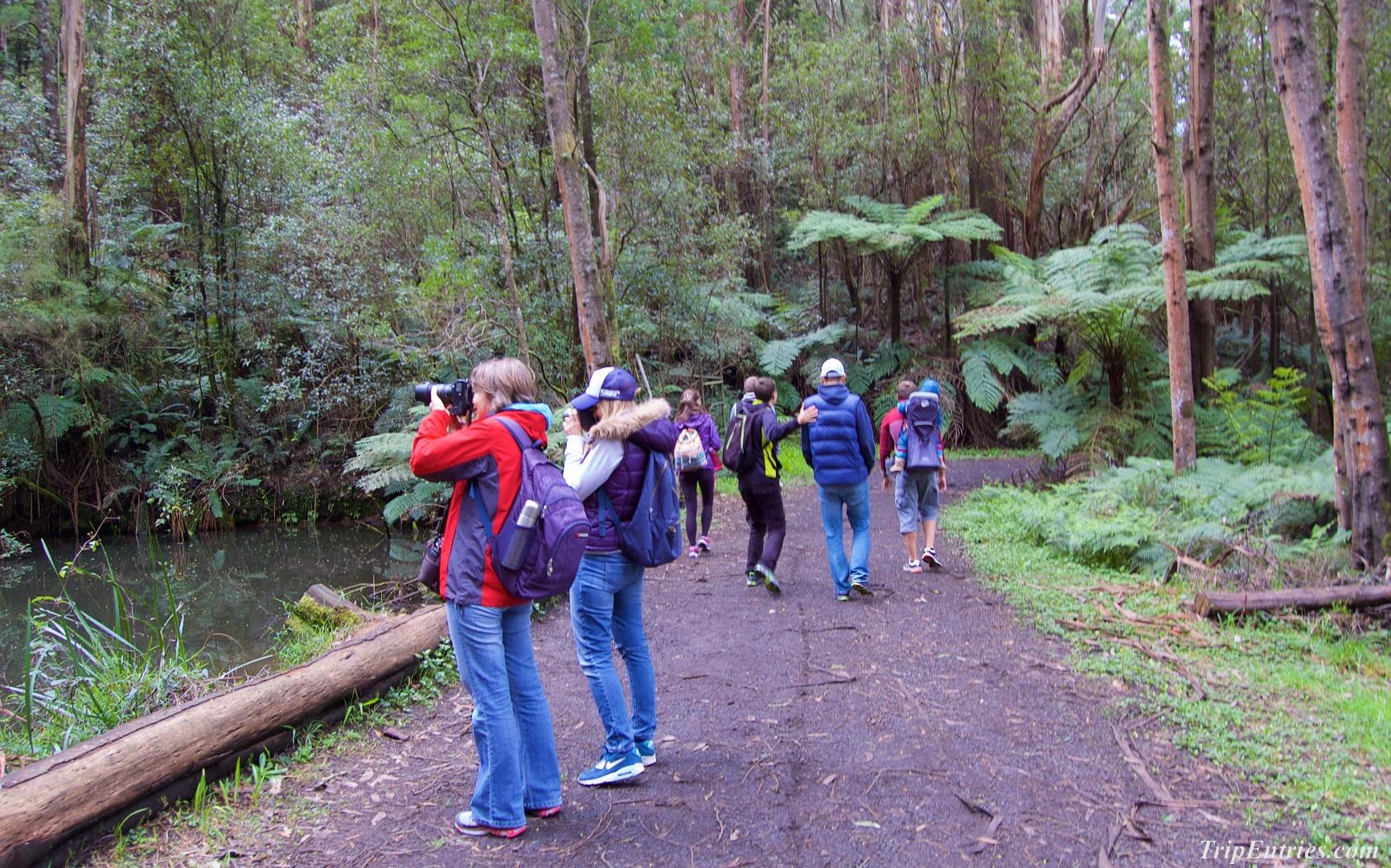 Поездка в Мельбурн: наш первый Parkrun и прогулки по австралийскому лесу