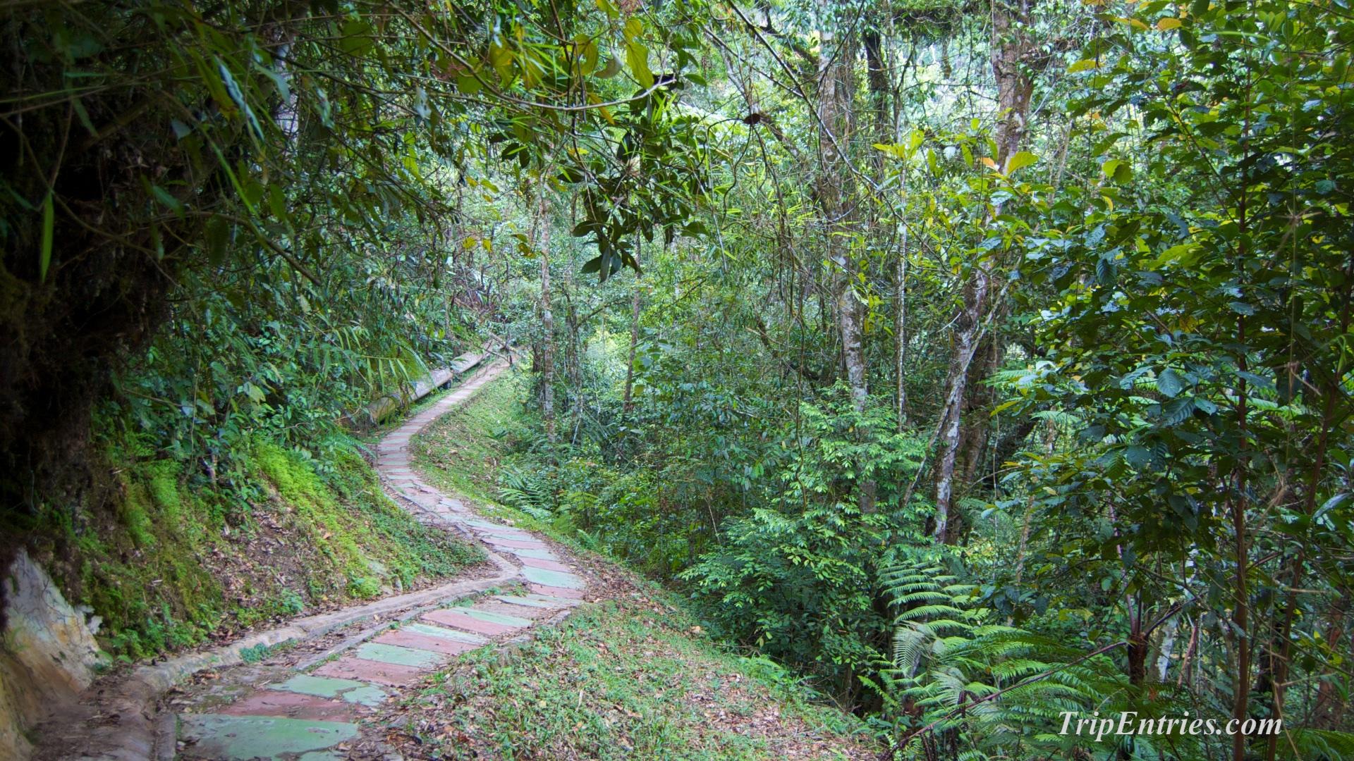 Cameron Highlands: Прогулки по джунглям