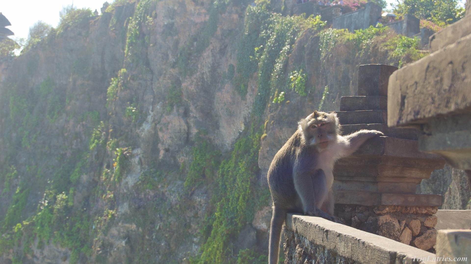 Храм Улувату - Uluwatu Temple и обезьянки