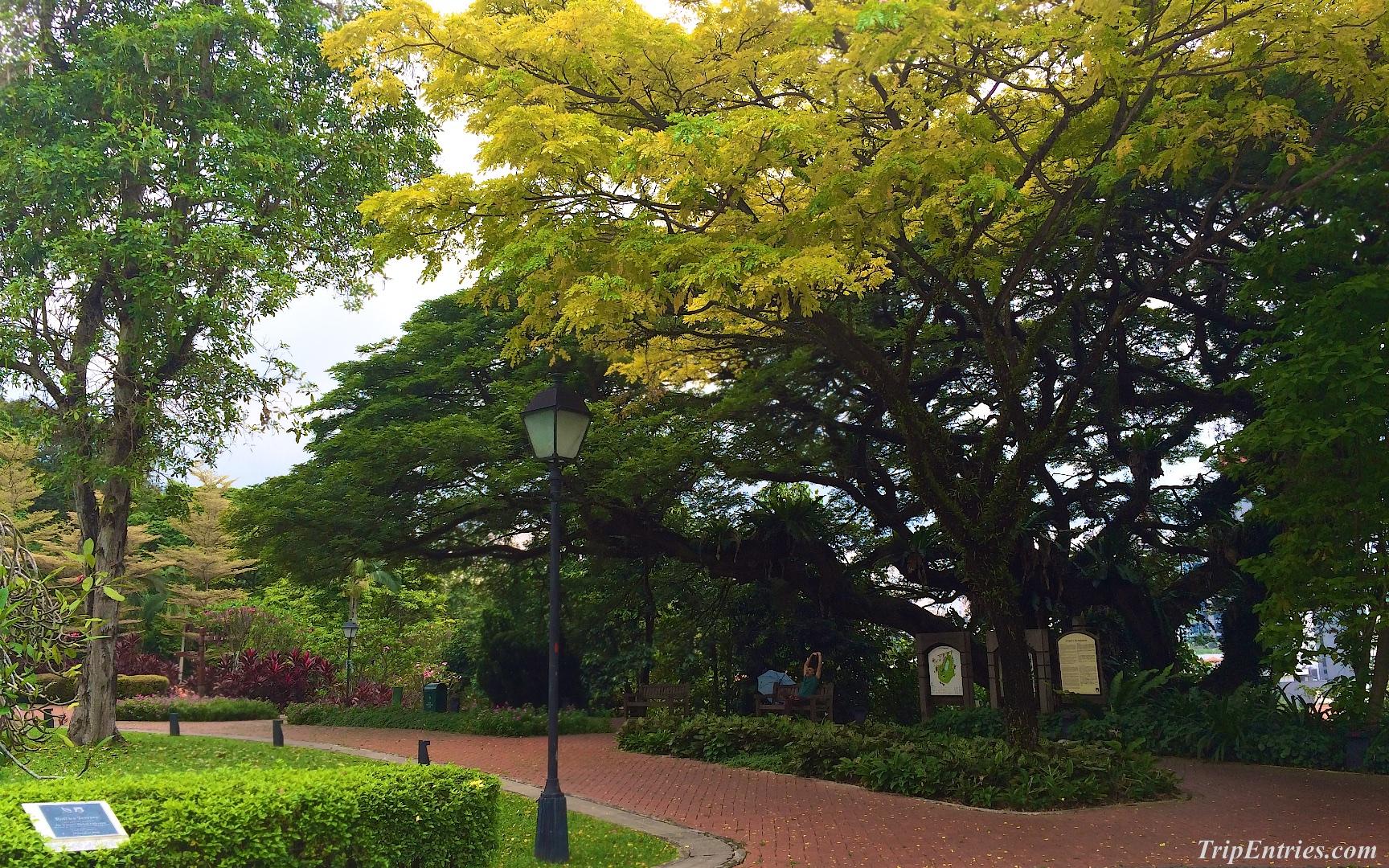 Первая поездка в Сингапур: прогулки под дождем, парк Fort Canning и возврат налогов