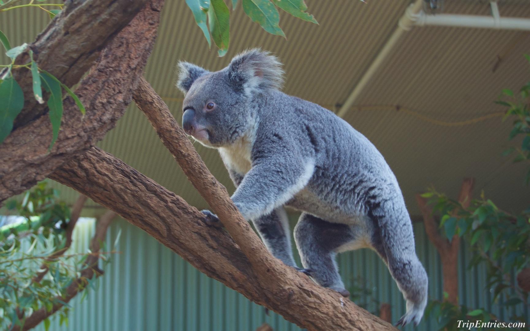 Сумасшедшие первые две недели в Сиднее