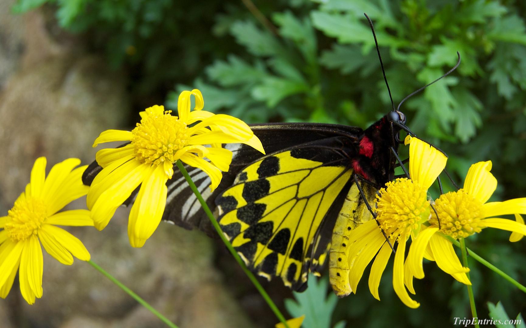 Cameron Highlands: бабочки, цветочки и вкусная клубника