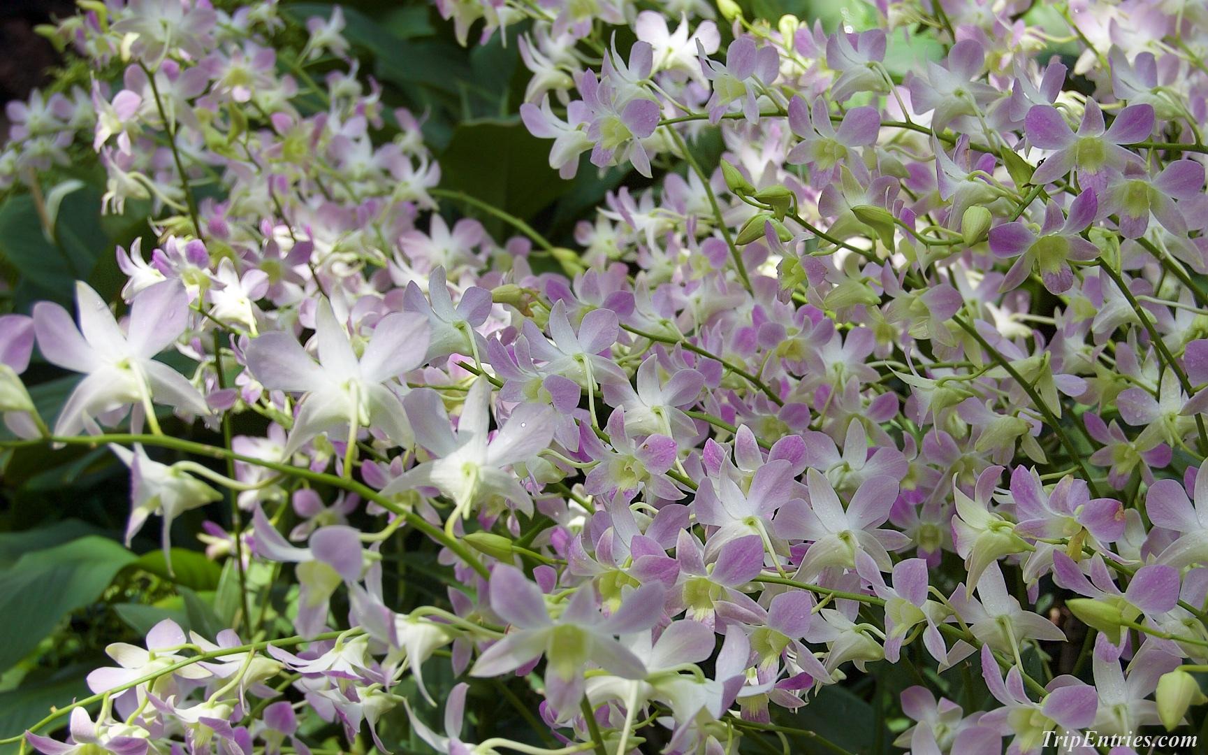 National Orchid Garden - сад орхидей в Сингапуре