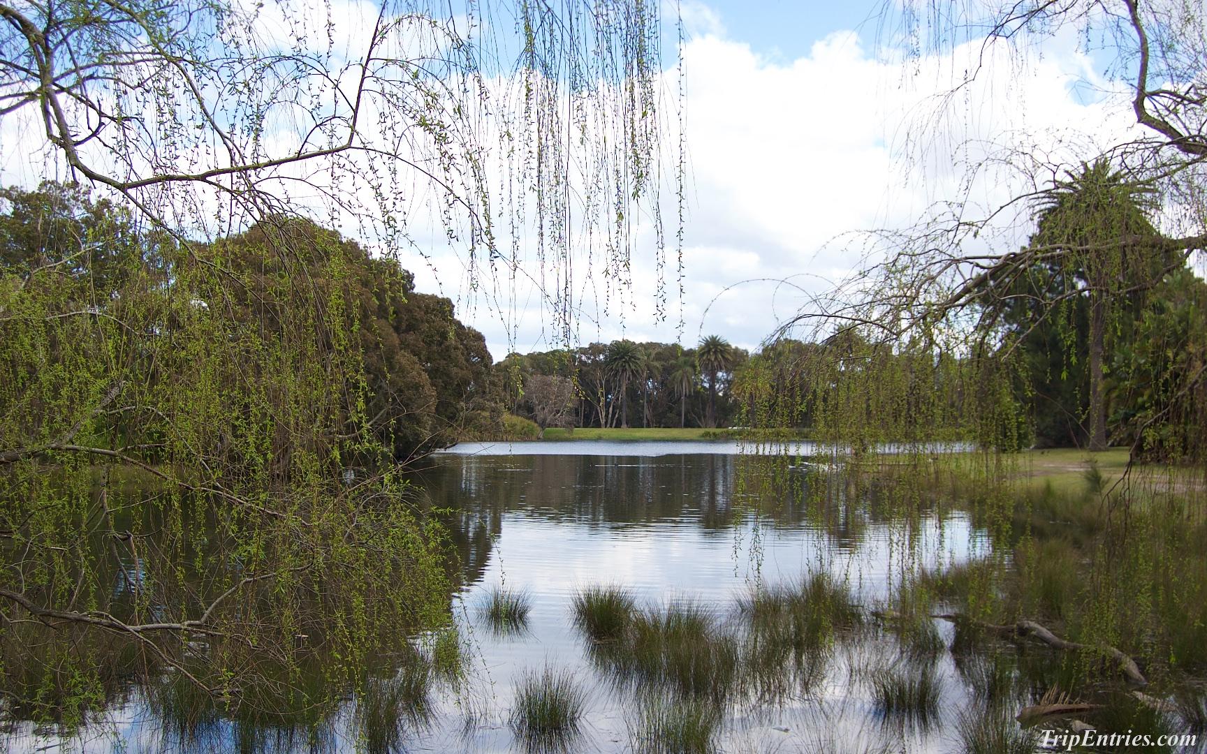 Прогулки по Сиднею: Centennial Park