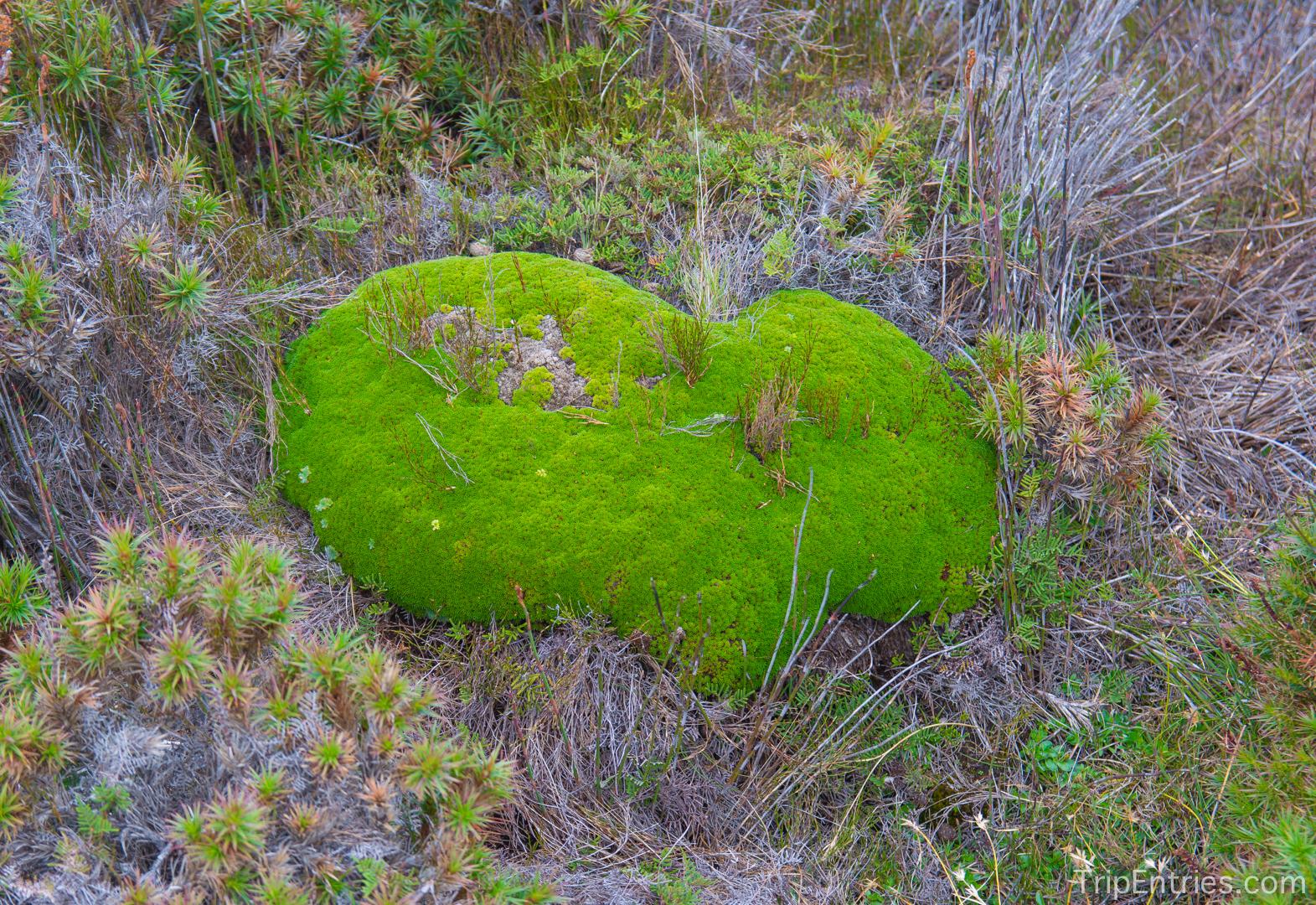 Как мы влюбились в Тасманию: прогулка у озера Pine